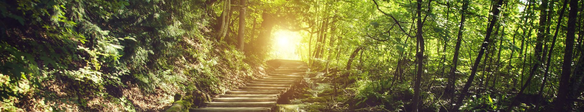 stairs on a forest path