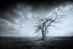 Black and white image of a leafless tree, representing the feelings of grief - get support at C&C Resources for Life