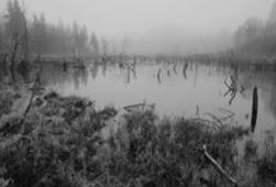 Black and white image of a swamp, representing addiction - find addictions counselling at C&C Resources for Life